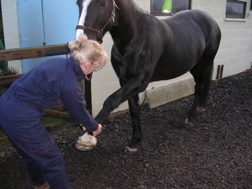 Horse Therapy3